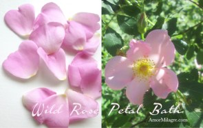 Amor Milagre Wild Rose Petal Bath Organic Beauty healthy lifestyle Ethical Books, Art & Design amormilagre.com