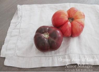 Amor Milagre Heirloom Tomatoes Organic Garden Farm Summer Harvest 2019 Ethical Organic Gift Shop Handmade Gift Shop Art Baby & Child amormilagre.com