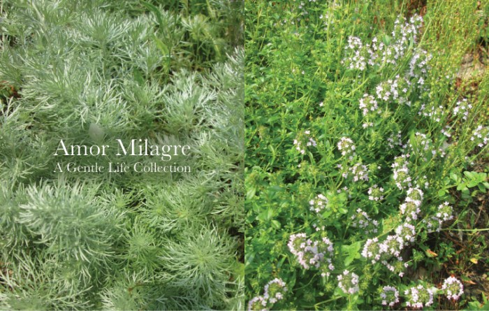 Amor Milagre Colour Mood Late Summer Days Thank you, Summer 2019 Ethical Organic Gift Shop Handmade Gift Shop Art Baby & Child creeping thyme cottage garden amormilagre.com