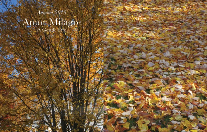 Amor Milagre Home & Garden Renovation Design Diaries & Tips Planting Spring Flower Bulbs & Seeds in Autumn Trees Leaves Ethical Gift Shop amormilagre.com