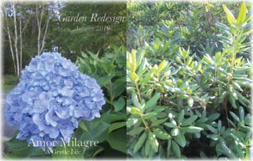 Shop Amor Milagre Garden Redesign Home & Garden Renovation Right Plant Right Place Autumn 2019 blue hydrangea Ethical Romantic Gift Collections amormilagre.com