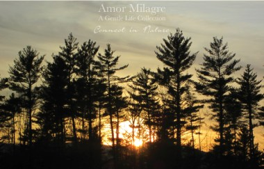Amor Milagre Late Winter Days 2020 connect in nature Ethical Gift Shop Handmade Art Baby & Child Parent Family trees sunset amormilagre.com