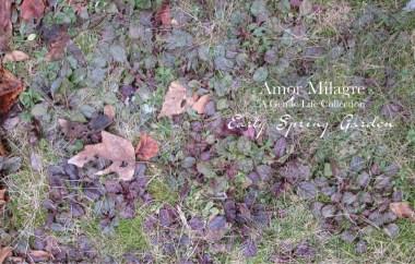 Amor Milagre Early Spring Garden Rose Cottage 10 2020 Ethical Organic Gift Shop Handmade Art amormilagre.com