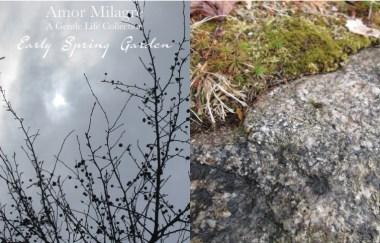 Amor Milagre Early Spring Garden Rose Cottage 14 2020 Ethical Organic Gift Shop Handmade Art amormilagre.com