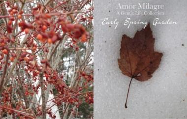 Amor Milagre Early Spring Garden Rose Cottage 2 2020 Ethical Organic Gift Shop Handmade Art amormilagre.com