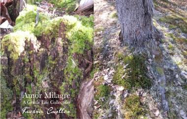 Amor Milagre Faerie Castles Spring Garden Rose Cottage 2020 Ethical Organic Gift Shop amormilagre.com 2