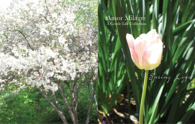 Amor Milagre Spring Love Garden Blossoming Tree Rose Cottage 2020 Ethical Organic Gift Shop amormilagre.com