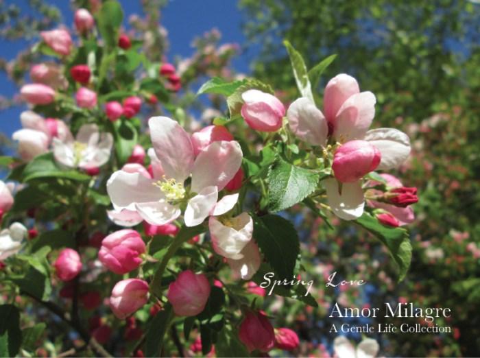 Amor Milagre Spring Love Garden Rose Cottage 2020 Ethical Organic Gift Shop amormilagre.com 1
