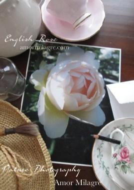 English Rose Nature Photography Art Print Amor Milagre amormilagre.com 1