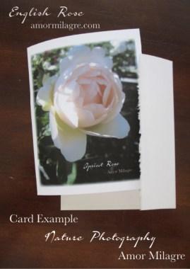 English Rose Nature Photography Greeting Card Example Stationery Amor Milagre amormilagre.com 1