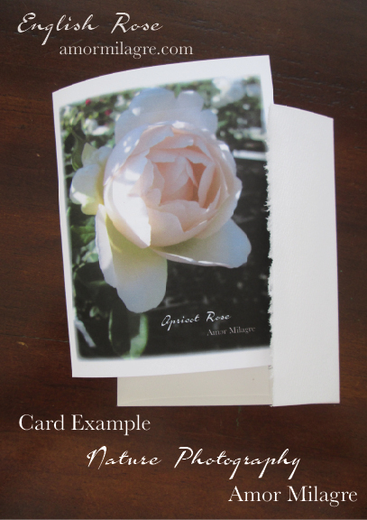 English Rose Nature Photography Greeting Card Example Stationery Amor Milagre amormilagre.com 1