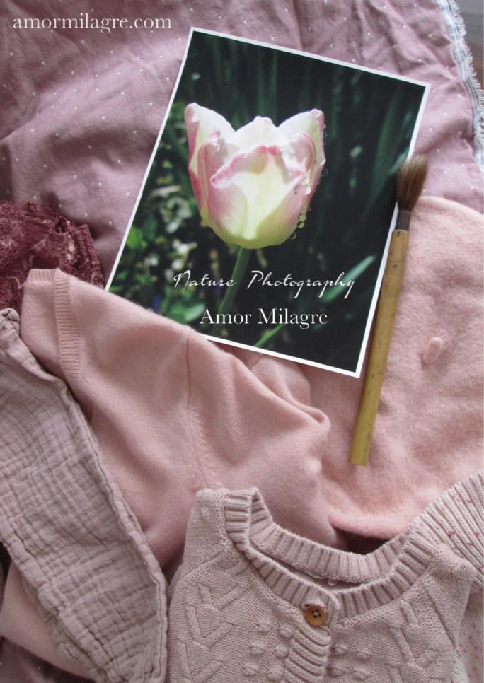 Amor Milagre Dewdrop Pink Tulip Garden Photography Art Print amormilagre.com