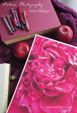 Amor Milagre Pink Tulip Petals Ballet Nature Photography Art Print 1 amormilagre.com