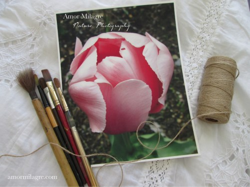 Amor Milagre Pink Tulip Petals Ballet Nature Photography Art Print amormilagre.com
