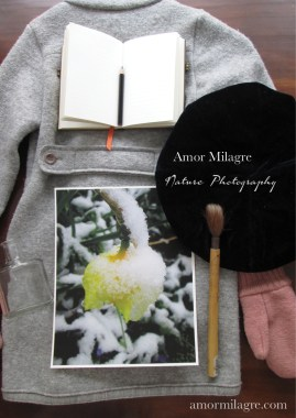 Amor Milagre Sleeping Yellow Daffodil in the Snow Flower nature photography 1 amormilagre.com
