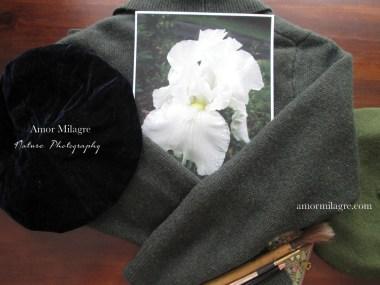 Amor Milagre White Dewdrop Iris Flower Nature Photography amormilagre.com
