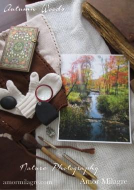 Autumn Foliage New England Woods Forest Photography Art Print Amor Milagre amormilagre.com 1