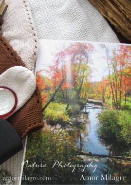 Autumn Foliage New England Woods Forest Photography Art Print Amor Milagre amormilagre.com