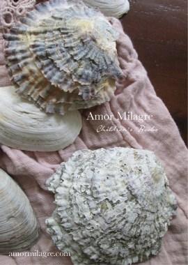 Amor Milagre Sage's Soft Summer children's book amormilagre.com 7
