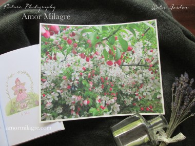 Amor Milagre Apple Blossom Tree Garden Nature Flower Photography Art Print amormilagre.com 2
