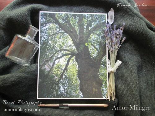 Amor Milagre France Travel Photography Paris Tree Garden Nature Art Print amormilagre.com 2