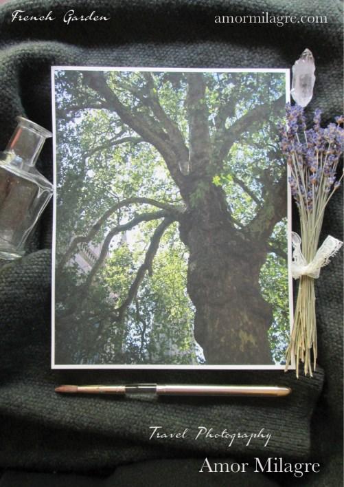 Amor Milagre France Travel Photography Paris Tree Garden Nature Art Print amormilagre.com 4