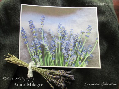 Amor Milagre French Lavender Collection Nature Flower Photography Art Print amormilagre.com