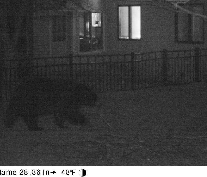 big bear, 8 p.m., 20 April 2014
