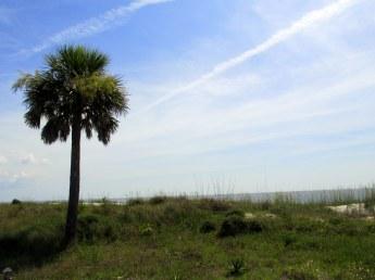 palmetto and ocean, Jekyll Island