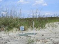 turtle nest 15 - mid-beach, Jekyll Island
