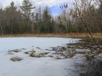 ice on pond