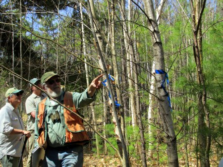 Jim quizzing us on birches, 6 May 2015