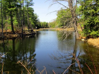 pond, 6 May 2015
