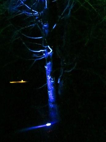 treeslitbluenearLargeLakeNightscapeLongwoodGardens7Aug2015