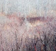 tepee in marsh, 3 Feb 2013