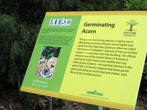 LegoGerminatingAcornsignGinterRichmond17July2016