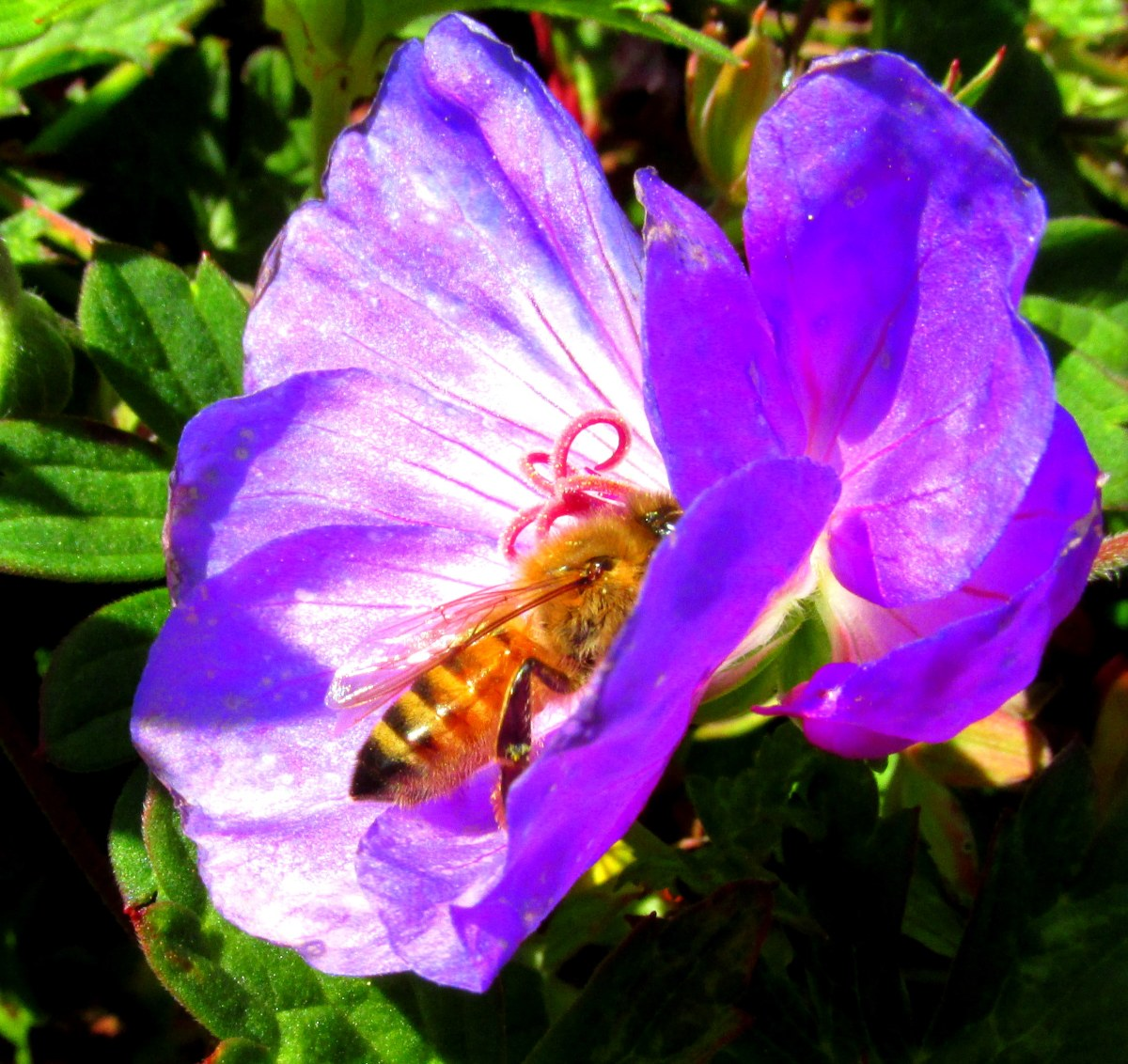 hight resolution of garden insects wasps bees of late and previously