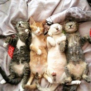 Famille de chats bébé sur acrylique imprimée