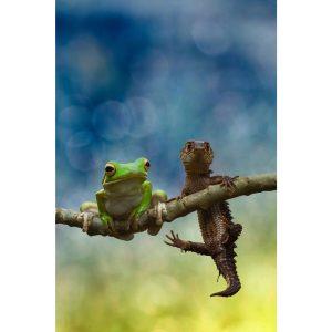 Photo de lézard avec une grenouille sur acrylique imprimée
