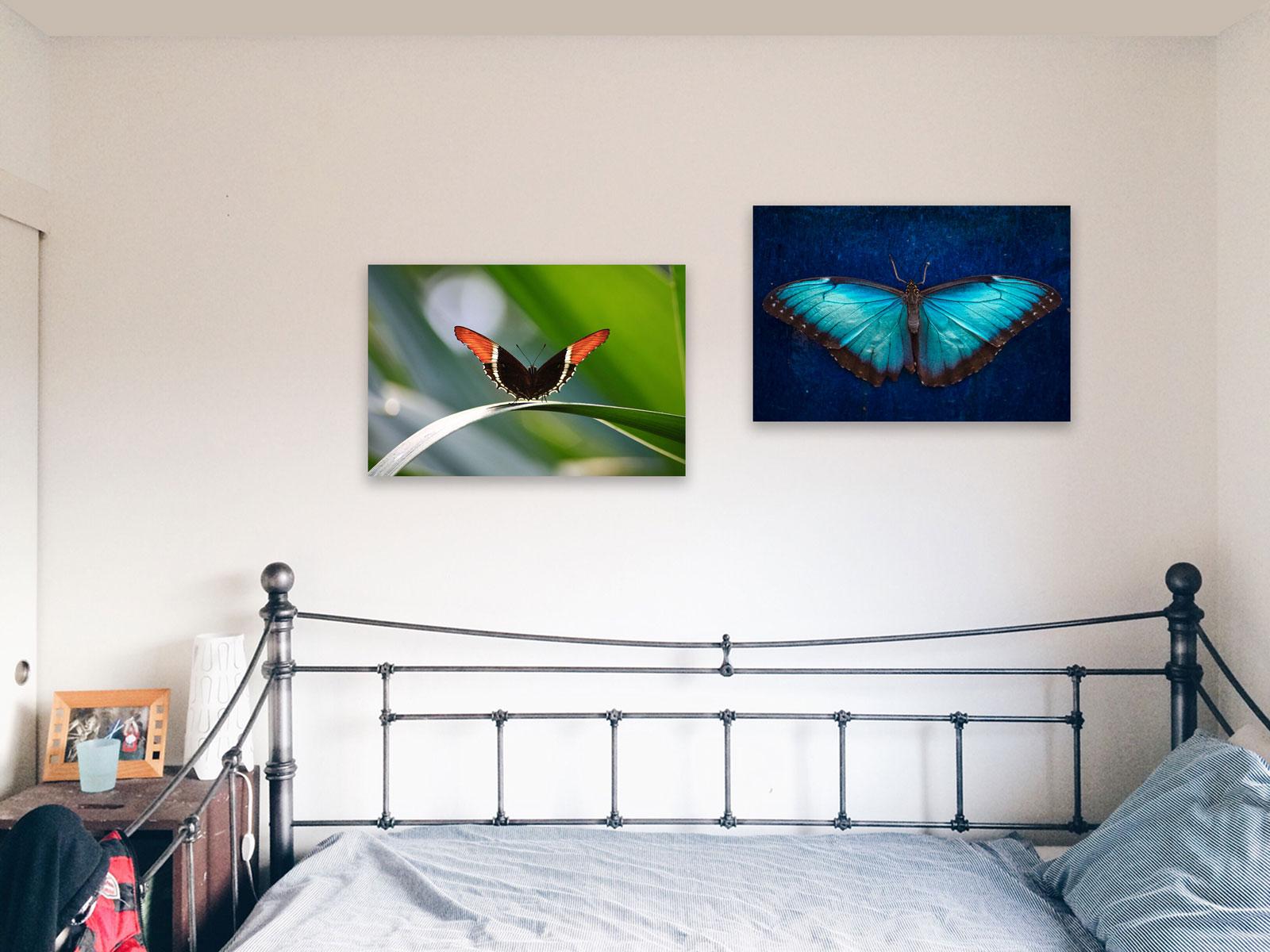 Papillon orange et noir sur acrylique imprimée