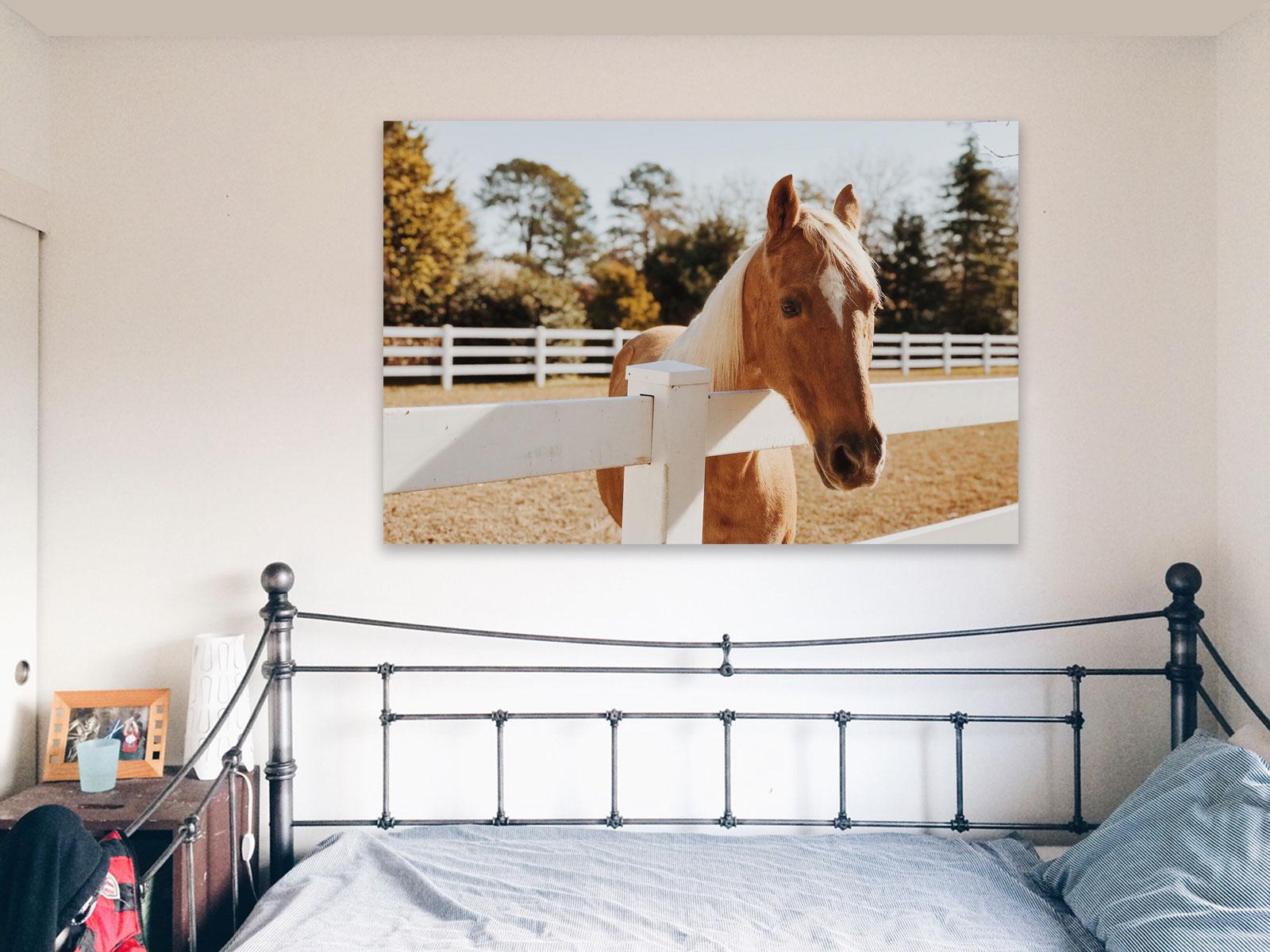 Photo de Cheval sur acrylique imprimée