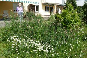 Sommerlicher Garten der Seniorenresidenz