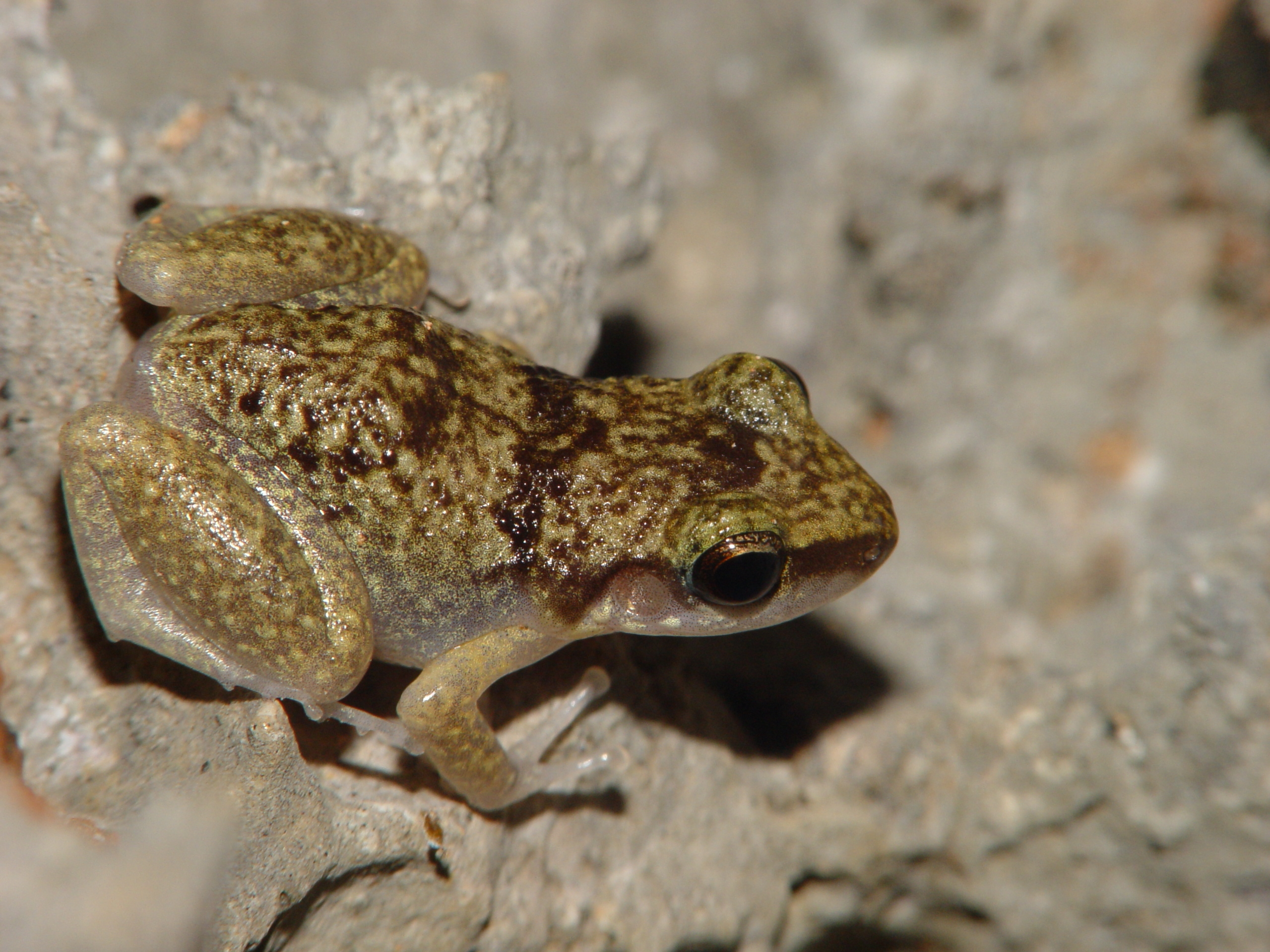 Amphibian Word Search