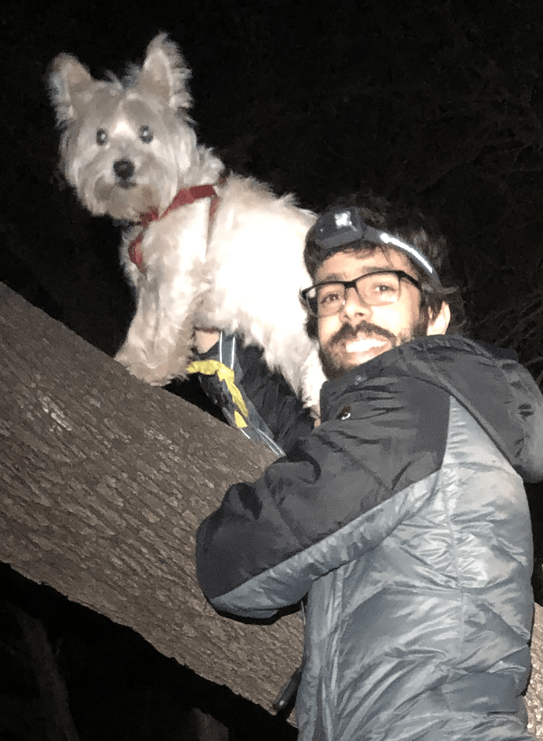 Latinx man with beard, black-rimmed glasses, and a headlamp, wearing a black and gray jacket, holding up a silky-white dog with pointy ears and a red harness on a fallen log.