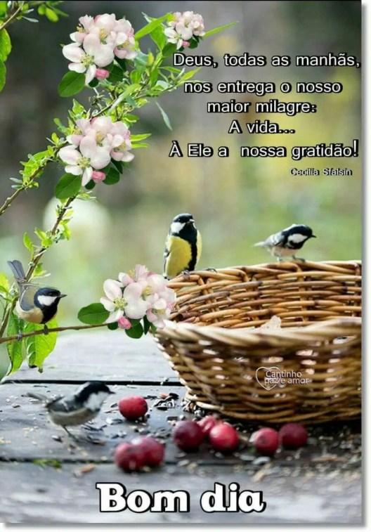 DEUS, todas as manhãs nos entrega o nosso maior milagre, a vida.