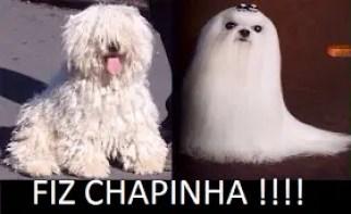 Memes engraçados de animais cachorrinha