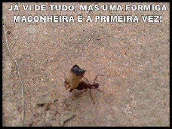 Memes engraçados de animais formigas
