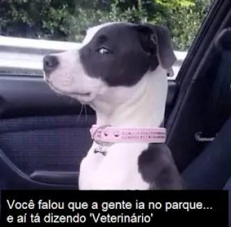 Memes engraçados de animais cachorro indo pro veterinario
