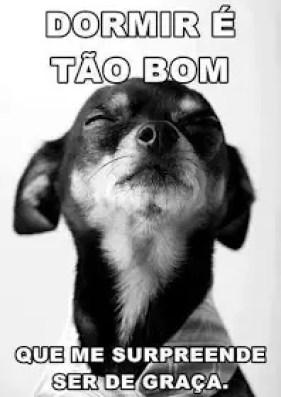 Memes engraçados de animais cachorrinho com graça