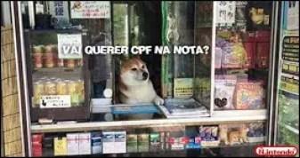 Memes engraçados de animais gato no caixa da loja